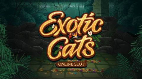 Exotic Cats Info